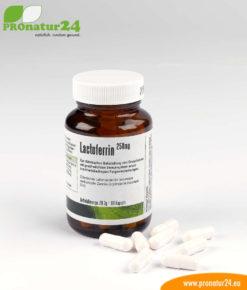 Lactoferrin für ein gesundes Immunsystem