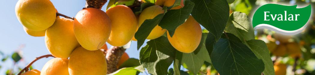 Wertvolle Nahrungsergänzungen von Evalar. Evalar weiß um die Wirkung von Kräutern und baut auf diese Kraft der Natur, direkt aus dem Altei in Südsibirien.